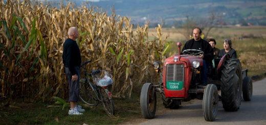 selo, srbija, ljudi, traktor, kukuruz, njiva