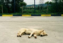 """Levijatan i dalje """"posećuje"""" Rome i oduzima životinje"""