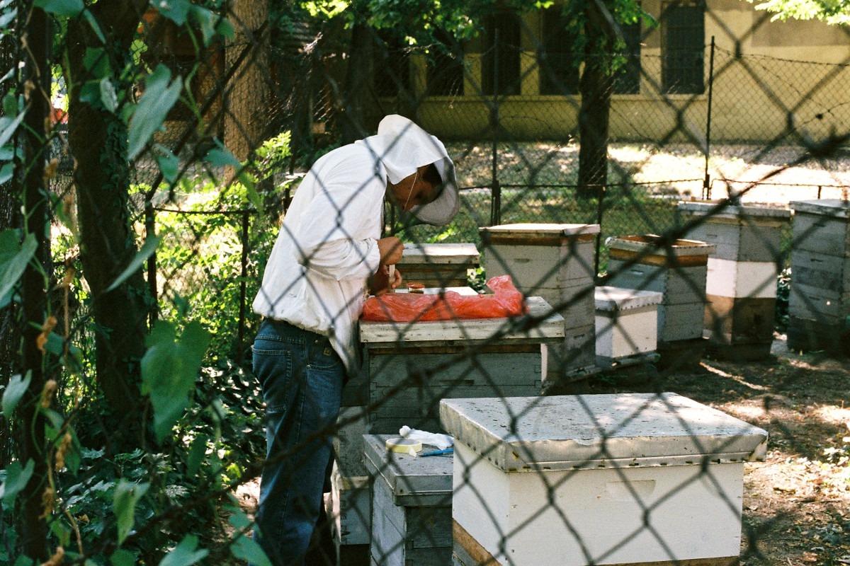 Pčelinjak Poljoprivrednog fakulteta u Zemunu; Foto: Marko Miletić